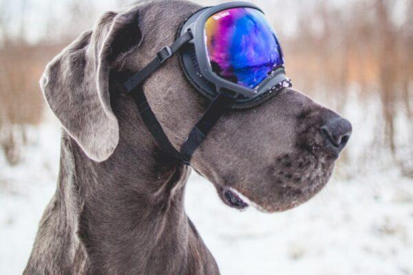 Wat zijn de trends voor het komende skiseizoen