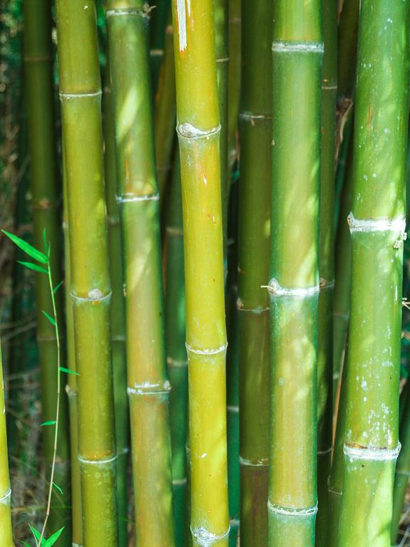 De populariteit van bamboe kleding verklaard